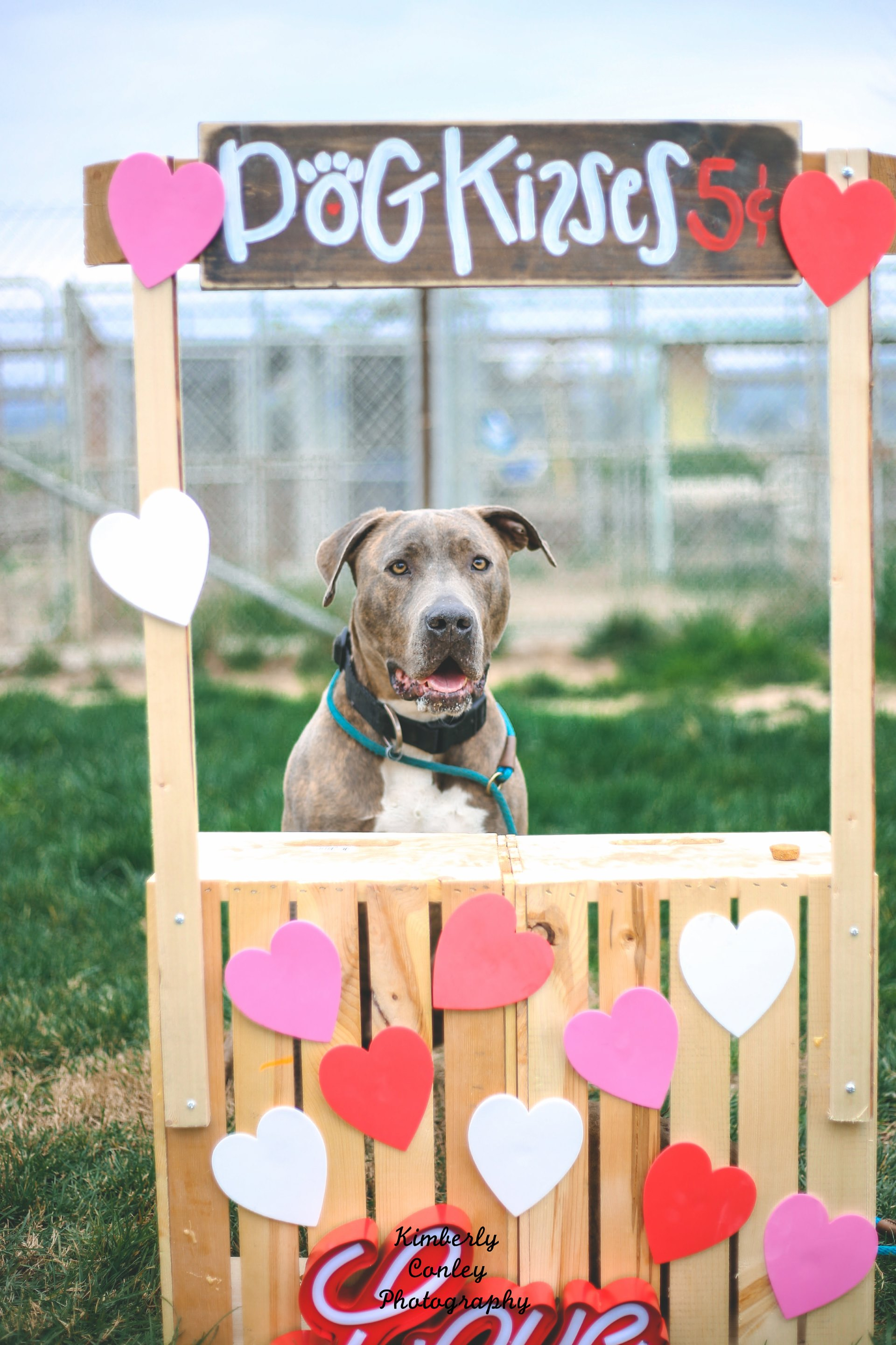 The C A R L Kissing Booth 2017 Edition Canine Adoption