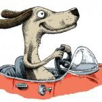 dog.drive