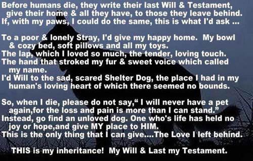 dog_will