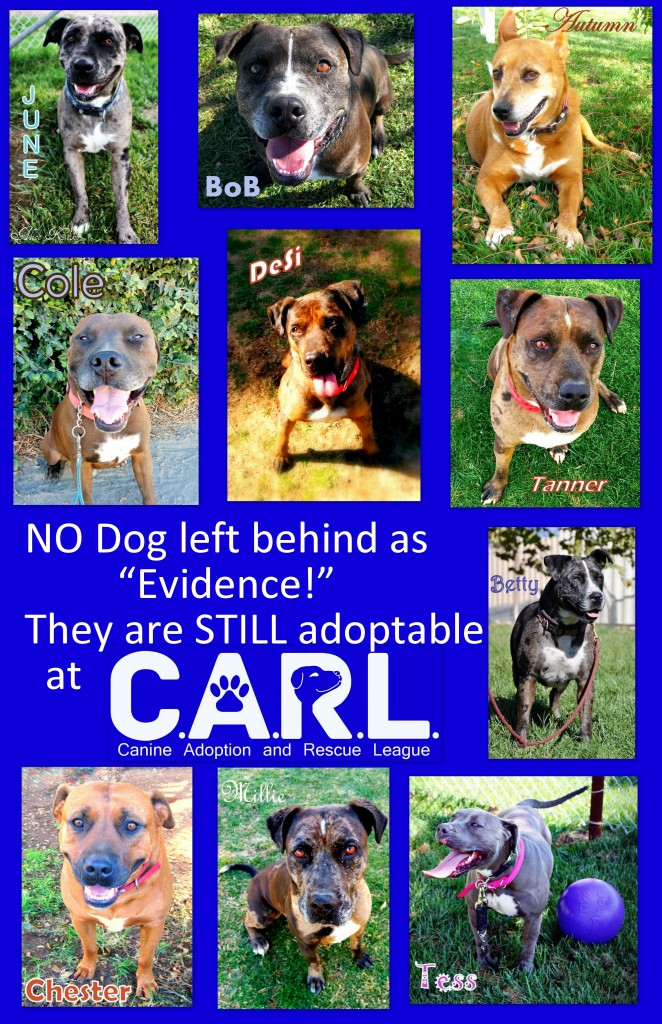 These dogs were rescued by C.A.R.L., STILL available to adopt, still safe & sound at our sanctuary!
