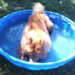 woody_in_wading_pool